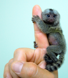 You + A Nonprofit = Fiscal-Sponsorship-Marmoset!