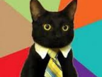 business-cat